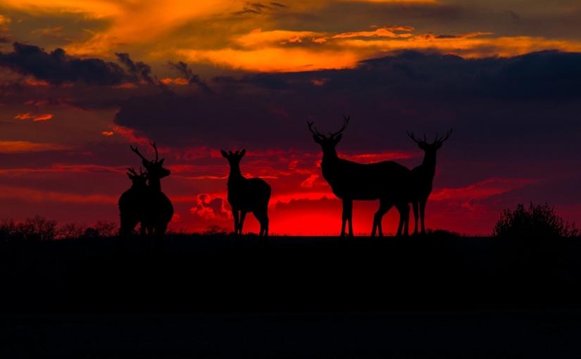 Wieczorne schadzki z jeleniami ozmroku